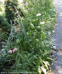 native plant st louis native plant garden tours wild ones u2013 st louis chapter