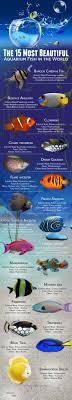 best 25 aquarium ideas on fish tank aquarium ideas