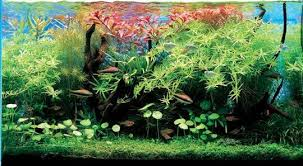 Amano Aquascaping Aqua Design Amano Aquarium Designer Takashi Amano Apartment Therapy