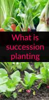 114 best best of backyard eden organic gardening gardening