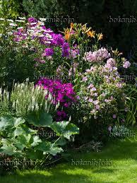 day lilies image daisies leucanthemum phlox phlox day lilies