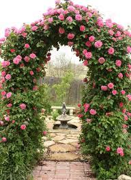 climbing rose trellises quiet corner