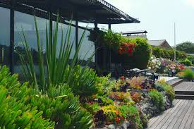 drought tolerant native plants drought busters expert tips on landscape water conservation