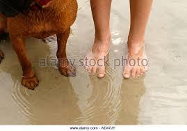 boxer dog feet dog feet stock photos u0026 dog feet stock images alamy
