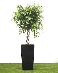 top house plants top fresh air house plants house of plants