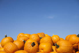 pumpkins health benefits and nutritional breakdown