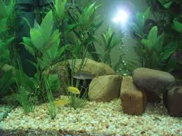 cheap aquarium decoration ideas aytsaid com amazing home ideas
