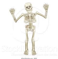 Cartoon Human Anatomy Vector Illustration Of A Cartoon Human Skeleton Holding Up Both