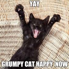 Happy Cat Meme - happy cat memes imgflip