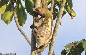 canopy amazon amazon rainforest canopy canopy animals thinkjungle com