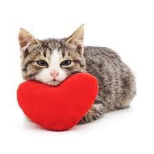 grumpy cat valentines can you give a grumpy cat a home this s