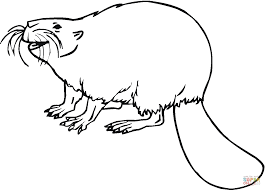 beaver 14 coloring page free printable coloring pages