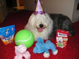 belgian sheepdog crossword your dog u0027s birthday photos newsday