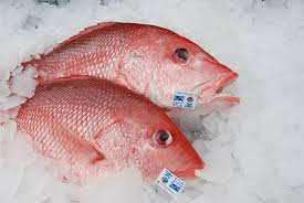 we can all agree on healthy red snapper populations in the gulf