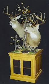 Deer Pedestal North America Gallery Sportsman U0027s Taxidermy Studio