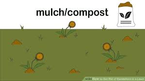 How To Get Rid Of Moles In The Backyard by How To Get Rid Of Dandelions In A Lawn 12 Steps With Pictures