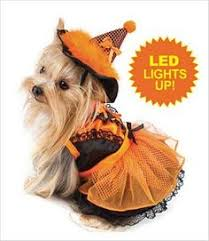 Yorkie Costumes Halloween 37 Adorable Animals Guilty Charged Costumes Dog
