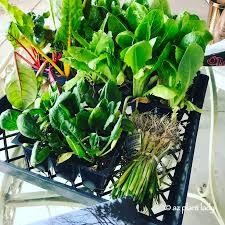 january in the southwest vegetable garden