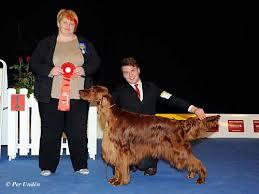 affenpinscher uppf are winners of the international dog show malmö sweden 28 29 march 2015