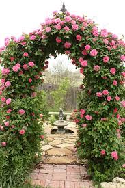 28 rose trellis plans climbing rose trellis plans how to