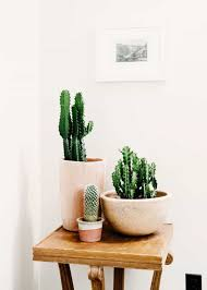 Beautiful House Plants Less Watering Cactus House Plants Watering Your Beautiful House