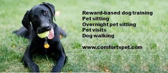 Creature Comforts Pet Sitting Creature Comforts Pet Sitting And Training Llc Home Facebook