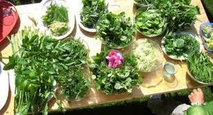 des ateliers pour apprendre à se nourrir des plantes sauvages 10