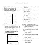 Dihybrid Cross Punnett Square Worksheet Possible Gametes Offspring Phenotypic Ratio B Cross A Homozygous