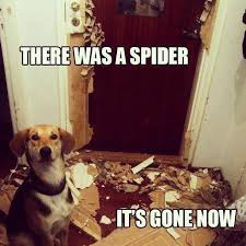 Funny Spider Meme - need a laugh these animal memes should do the trick grumpy cat