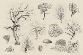 tree and shrub sketches 1 by elusiveafflatus on deviantart