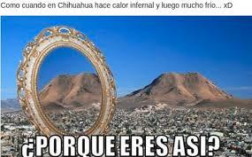 Memes De Chihuahua - chihuahua por qué eres así memes se quejan del clima extremo tiempo