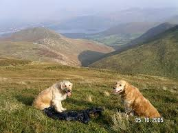 Dog Friendly Cottages Lake District by Best 25 Dog Friendly Accommodation Ideas On Pinterest Holiday