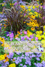 Flowers That Keep Mosquitoes Away 17 Plants That Repel Mosquitoes While Beautifying Your Yard A