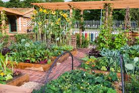 raised bed vegetable garden with fruit strawberries sunflfowers