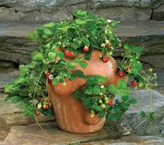 best 25 strawberry pots ideas on pinterest potted herb gardens