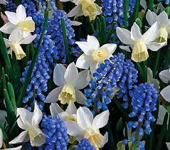 container fã r polterabend 47 best gardens images on botanical gardens garden