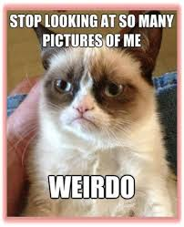 Lawyer Cat Meme - grumpy cat is now writing comic books and here are 6 sarcastic