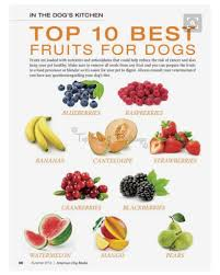 top 10 best fruits for dogs top shelf bulldogs