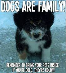 Border Collie Meme - come bye border collie rescue facebook