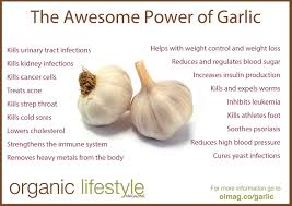garlic u2013 the most amazing herb on the planet