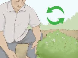 how to create a rain garden with pictures wikihow