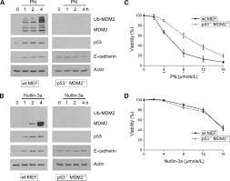 parthenolide promotes the ubiquitination of mdm2 and activates p53