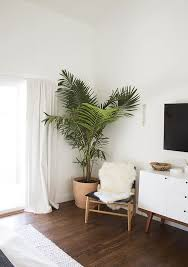 Home Ideas Living Room by Our Bedroom Before And After Palm Plants And Bedrooms