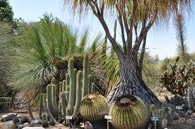 Ucr Botanical Gardens Ucr Today Cactus Garden