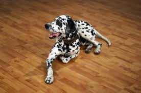 cleaning pet urine stains and odors from laminate flooring