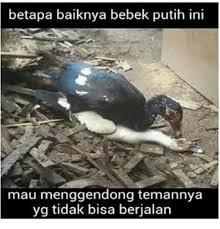 Meme Bebek - 25 best memes about indonesian language indonesian language