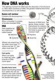 dna u0027s repair system studied in hopes of better cancer treatments