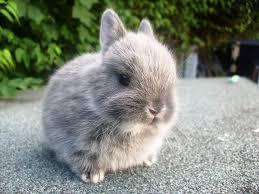 rabbit care netherlanddwarfbunny com