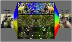 Examples Of Color Blindness The Colourful World Of Animal Vision