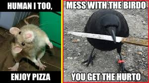 Memes Funniest - funniest memes from the animal kingdom ツ youtube